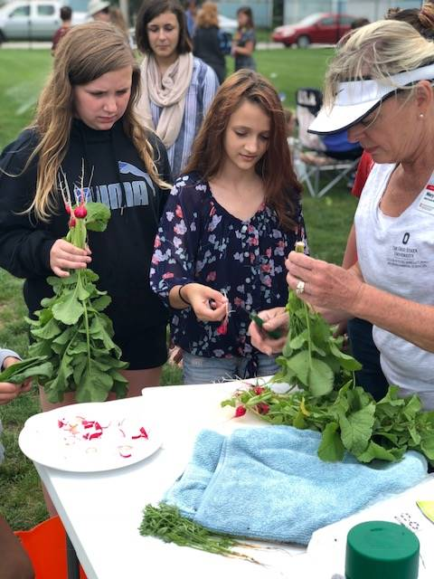 Master gardeners helping with harvest